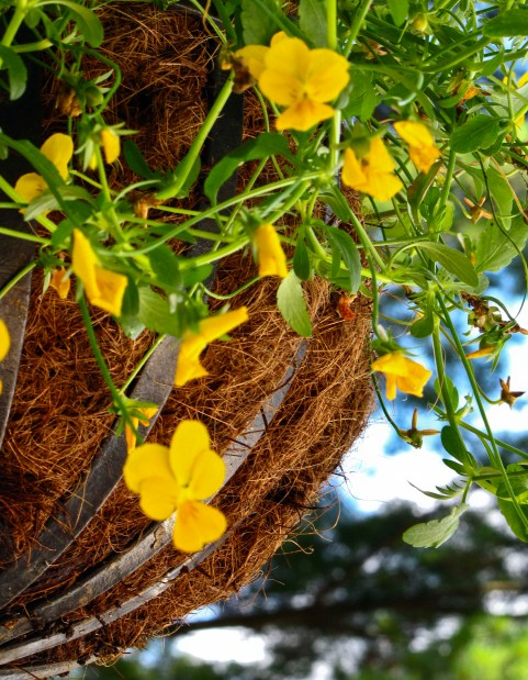Focus: Hanging Basket