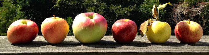 North Carolina apple varieties   www.theeverykitchen.com