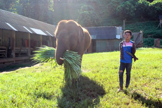 Elephant reserve in Thailand | www.theeverykitchen.com