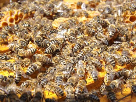 bees-486872_1280