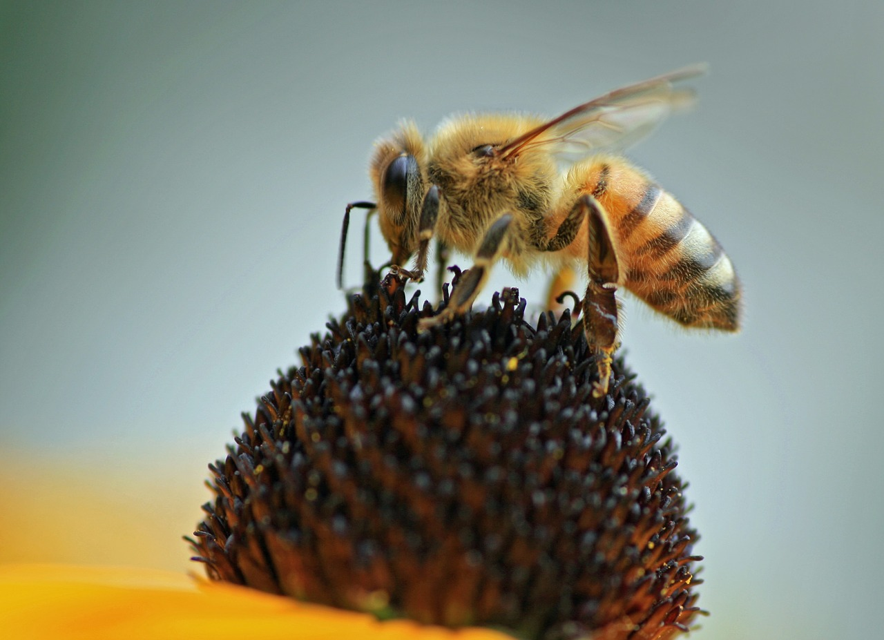 A Story About Loving Bees