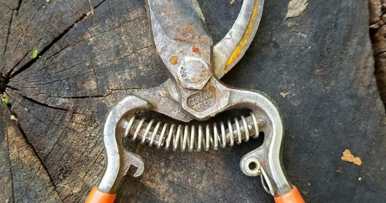 Oh Dear! My Rusty Pruning Shears