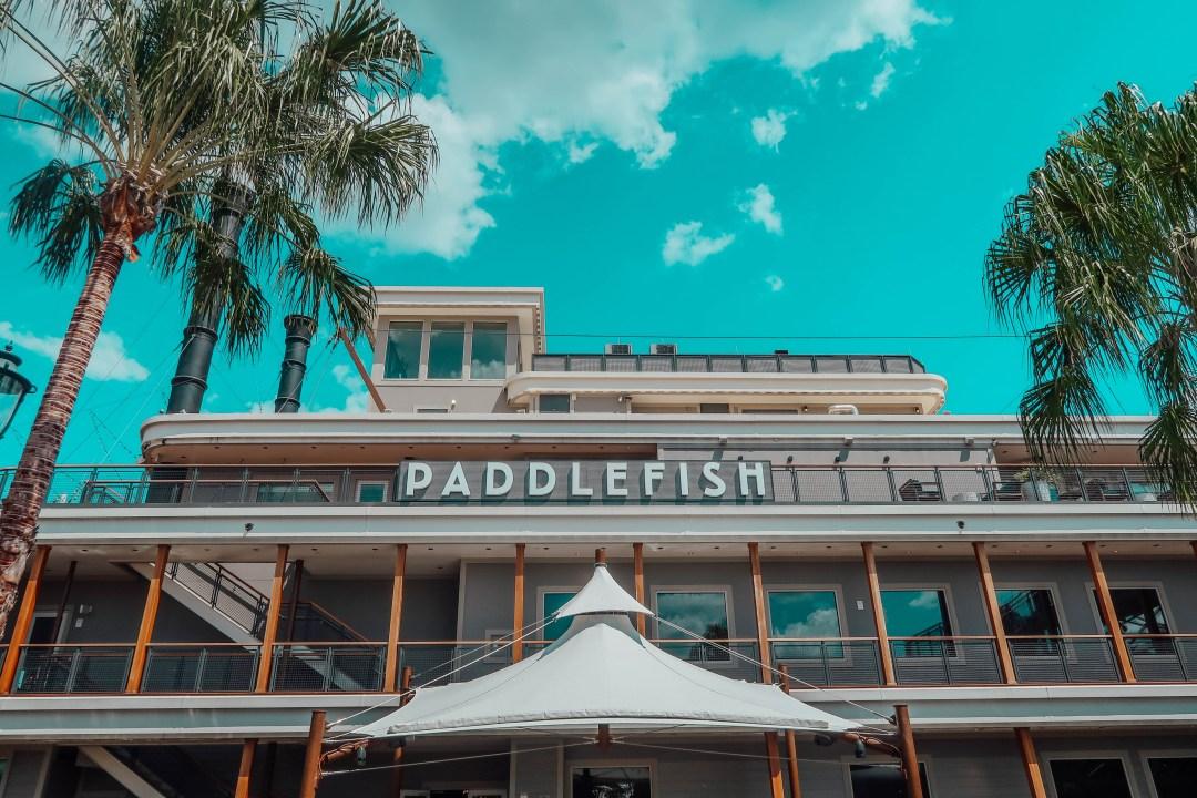 paddlefish8
