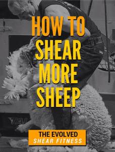 hw to shear more sheep