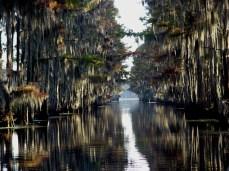 caddo-lake