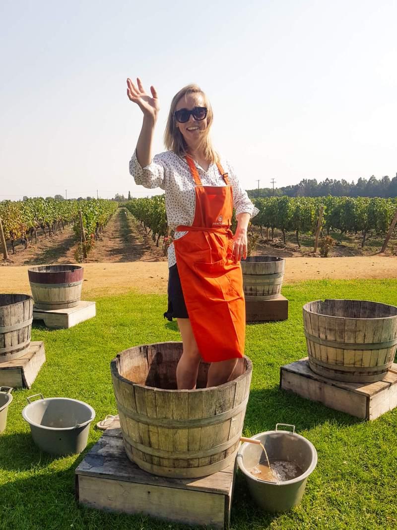 grape treading in Santa Cruz