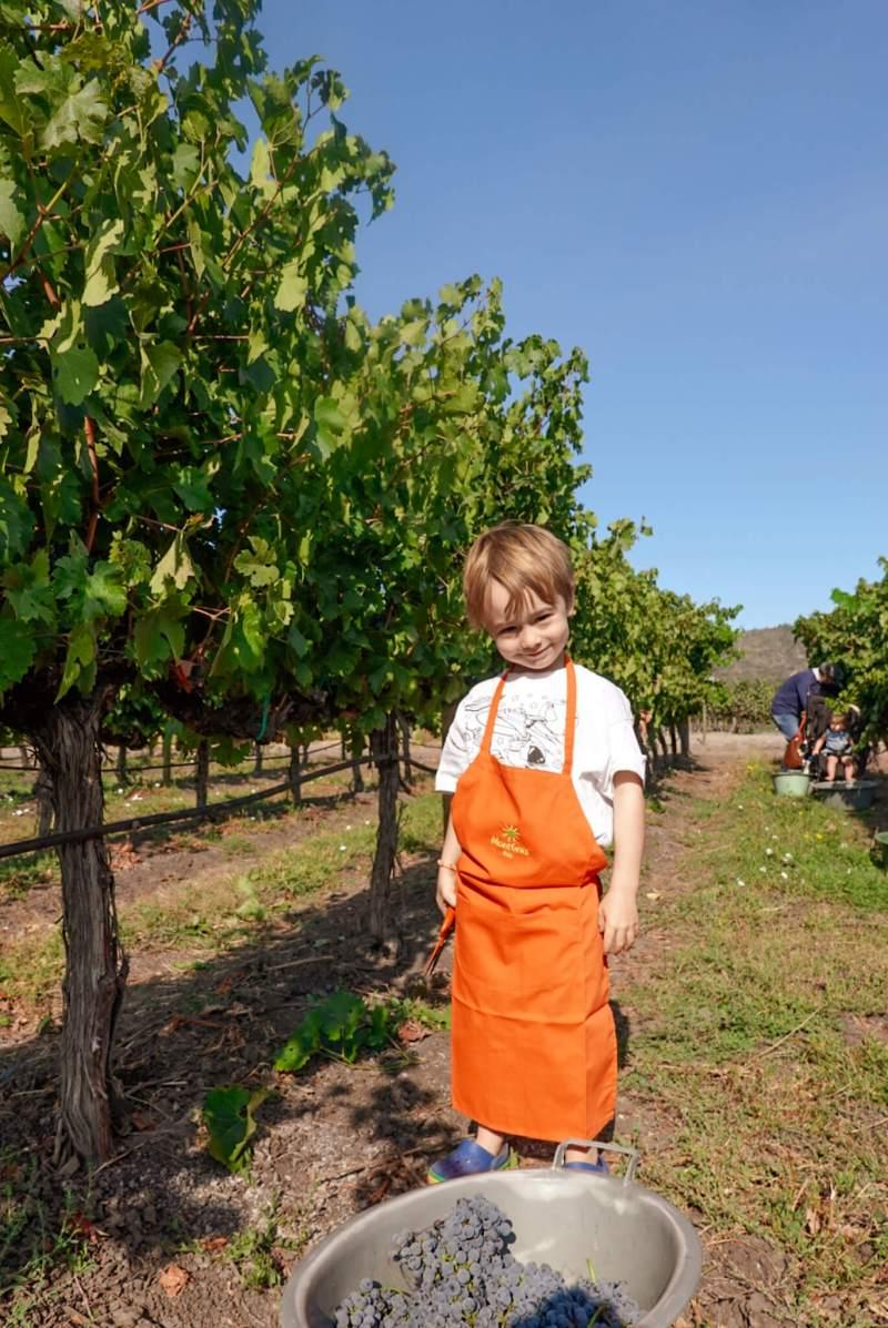 wine harvest with children in Santa Cruz