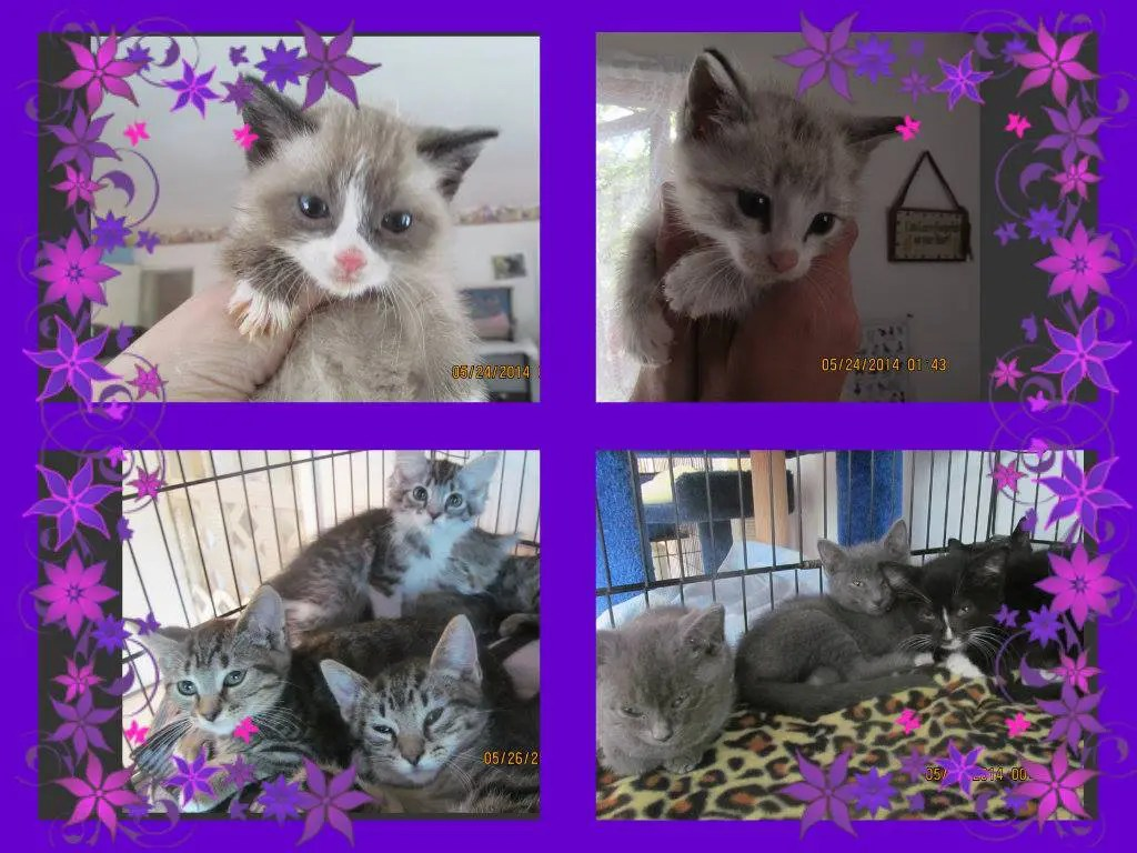 kittens01o