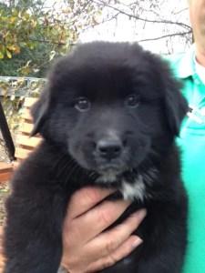 Thanksgiving pup 2