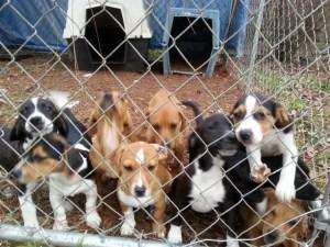 Dumpster pups