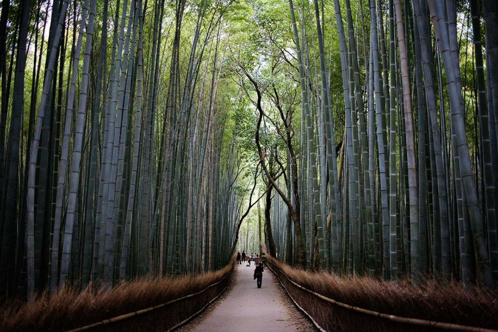 destination japan
