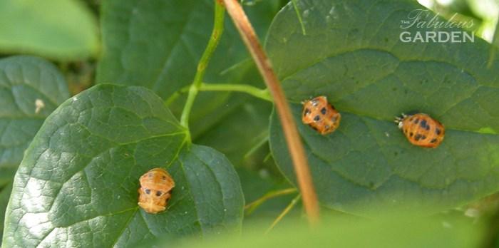 3 ladybug