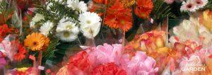 Flowers in flower shop