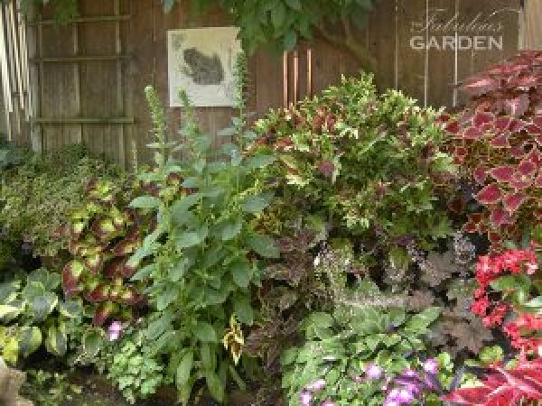 plants along a fence, with coleus