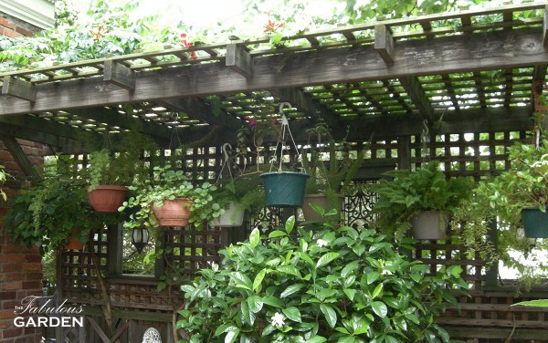 Collection of shade-loving hanging baskets spend their summers outside hanging on this trelliswork
