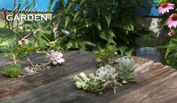 Succulents grow in hollowed out portions of a wooden table