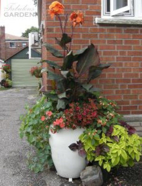 Ceramic planters add so much to the garden