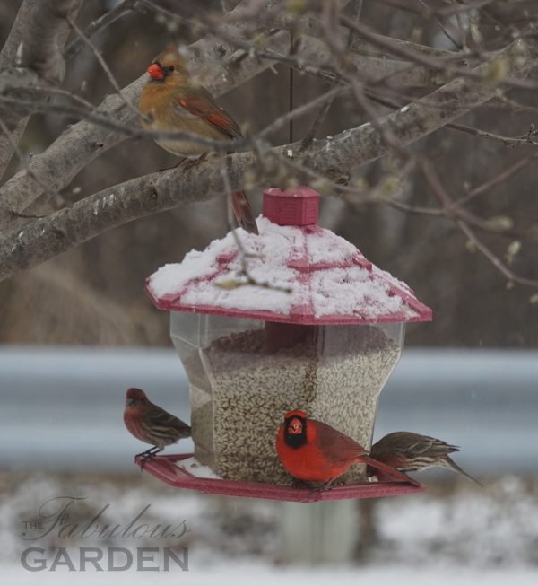 Birdfeeders attract many kinds of birds