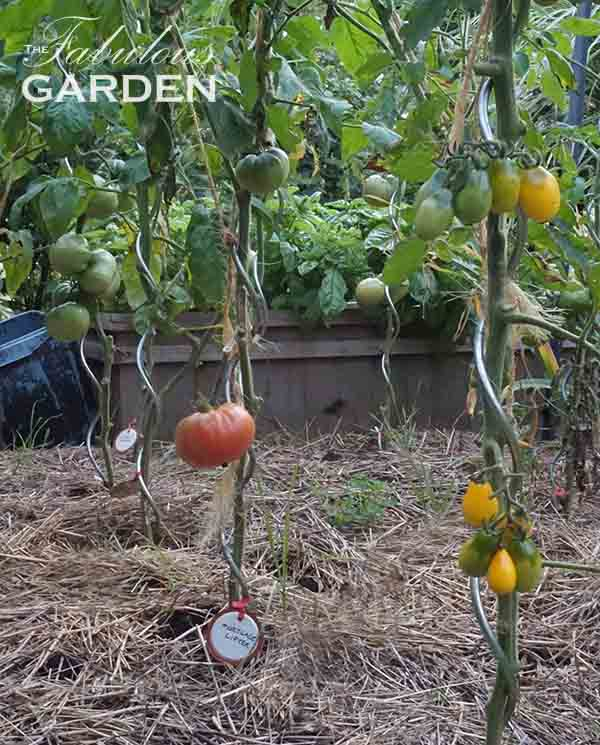 Easy and thrifty plant labels for your vegetable garden