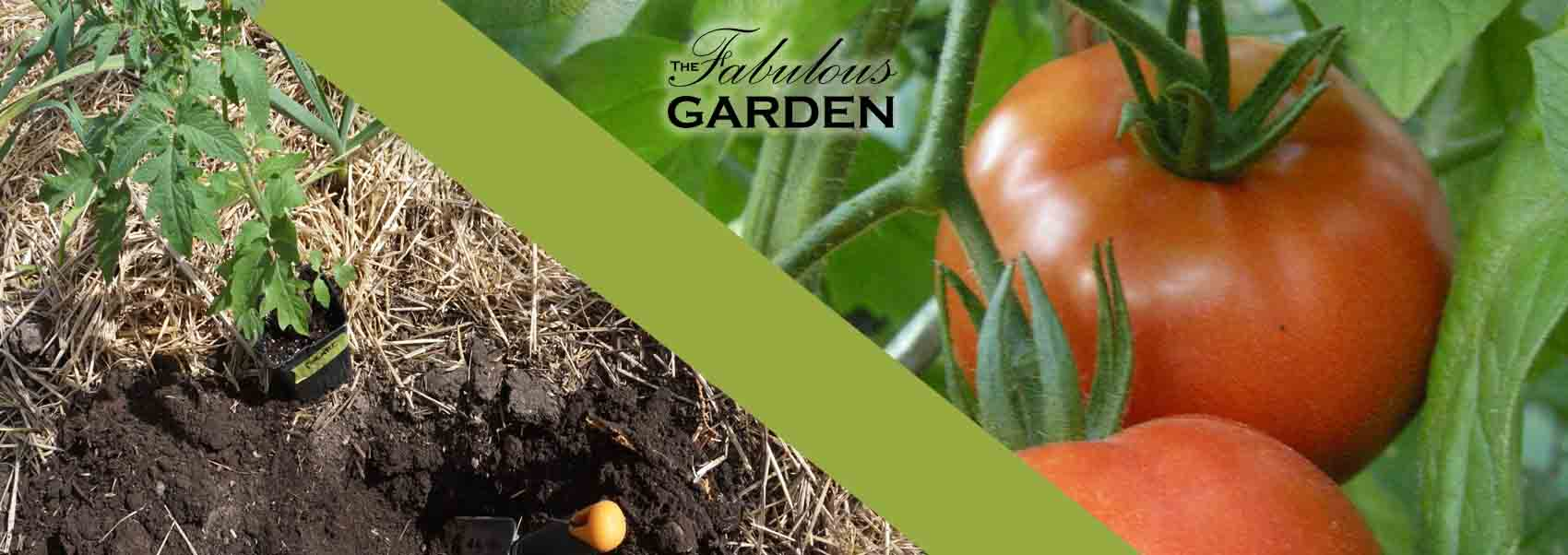 When to plant tomatoes for seedlings 2018 63