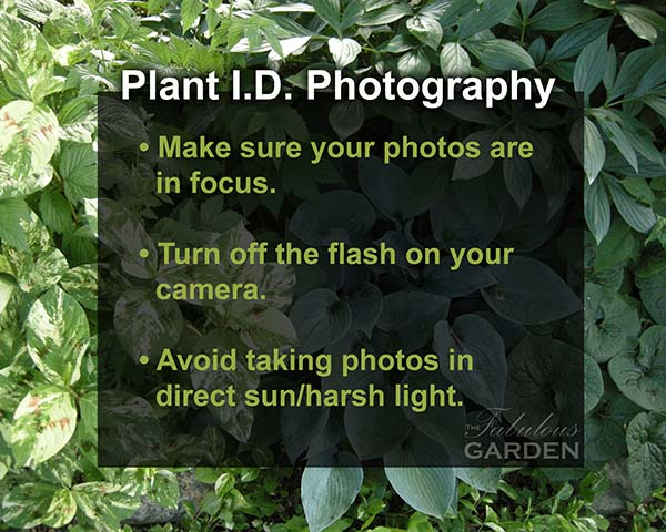 How to photograph plants for identification