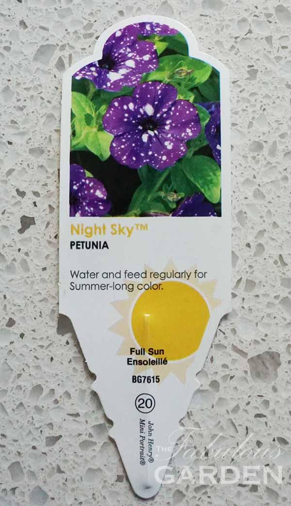 Plant profile: Night Sky Petunia