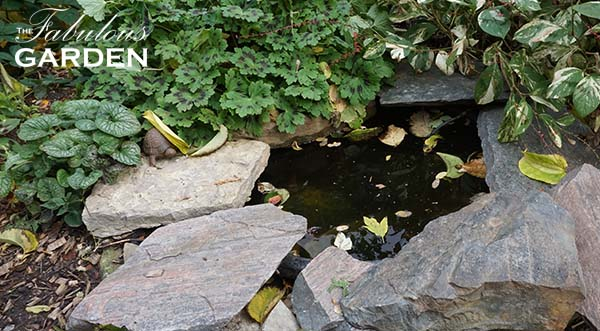How to get your small pond ready for winter