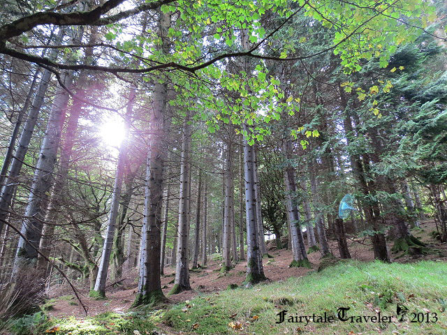 The forest seems magical on the way to the Hellfire Club photo by Christa Thompson
