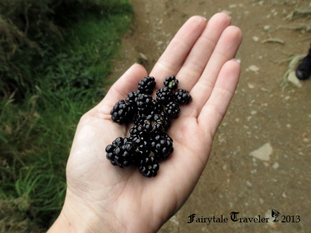 Blackberry time! photo by Christa Thompson