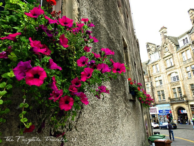 A side street off the Royal Mile. These flowers caught my eye. I love the contrast of them against the stone.