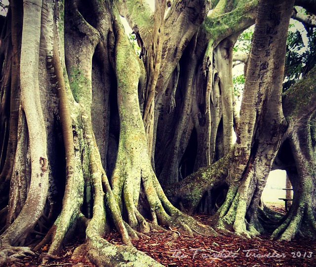 Banyan Tree 2