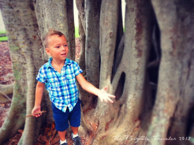 The Little and the Banyan Tree 3