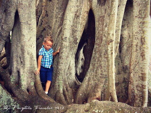 The Little and the Banyan Tree