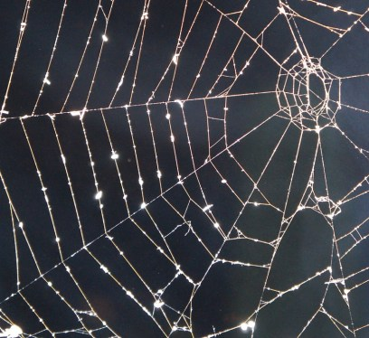 my hotel has spiders, trick or treating, cobweb, spider