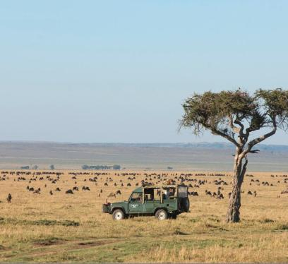 Wildebeests in the Mara Plains