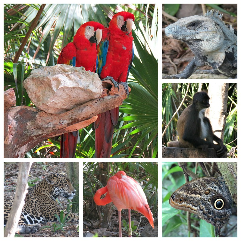 Some of the wildlife you'll see at the park. They are all in natural habitats and have lots of room to play and live.