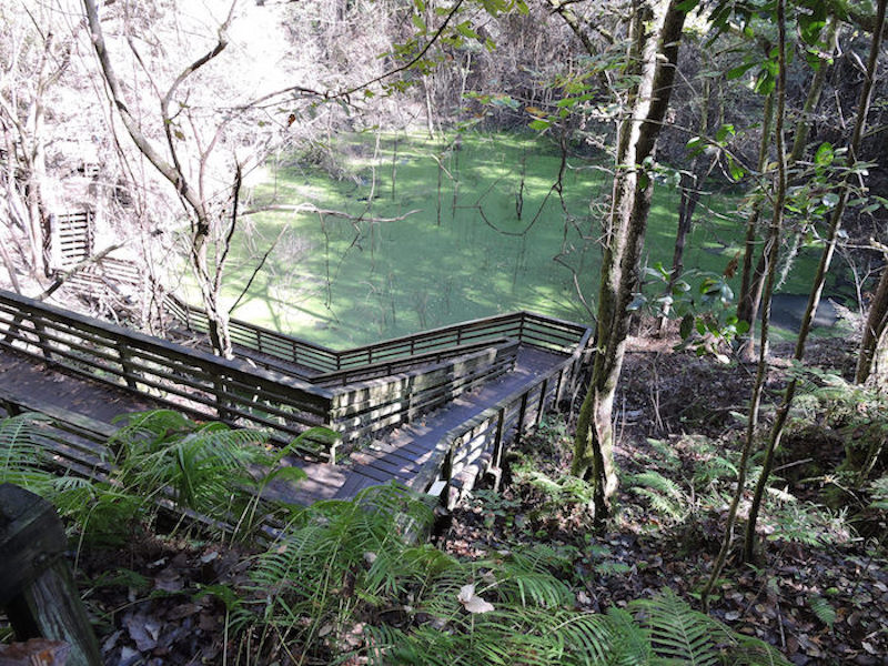 Things to Do in Florida Devil's Millhopper