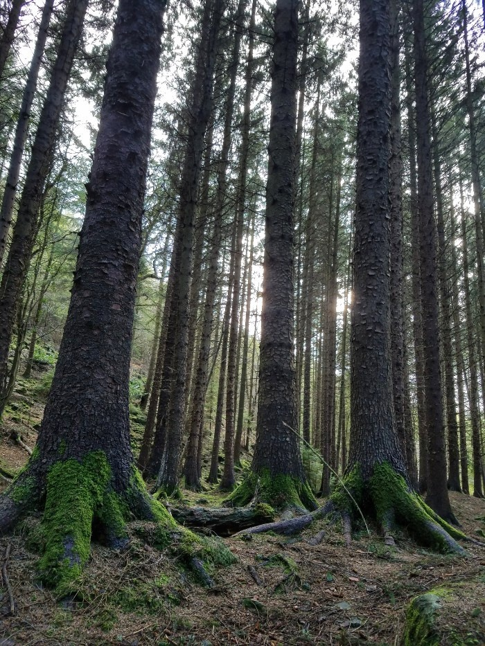 Game of thrones filming locations in northern ireland, tollymore forest