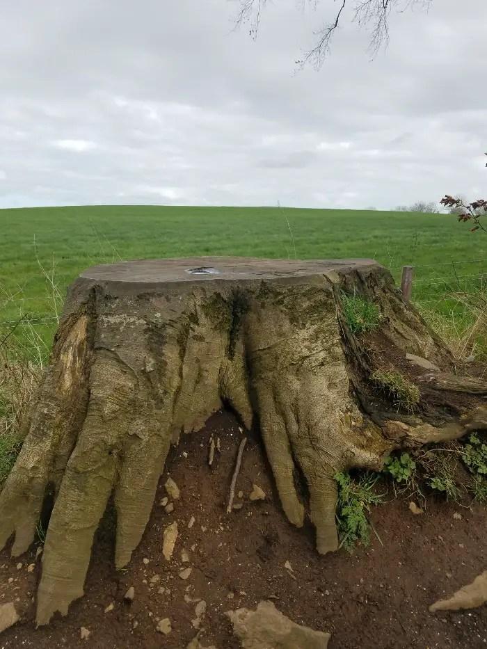 Game of Thrones Doors Northern Ireland, the dark hedges