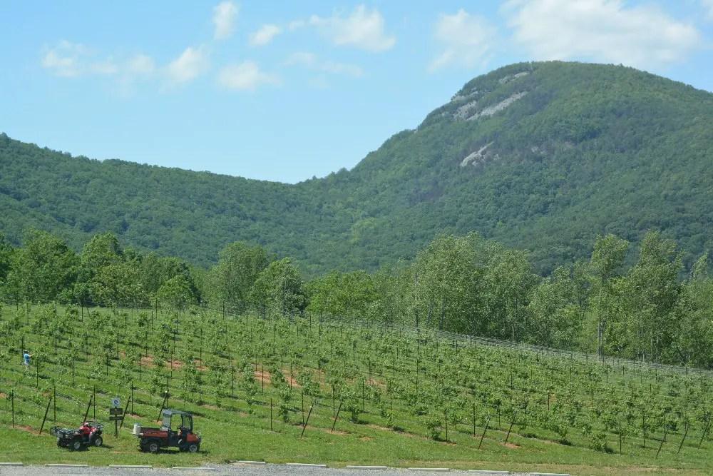 North Georgia Wine Country, Yonah