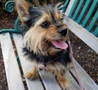 Pet Friendly Places in Canton Georgia, travel with pets