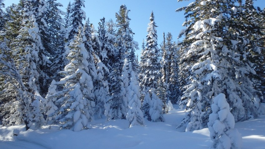 travel to Siberia