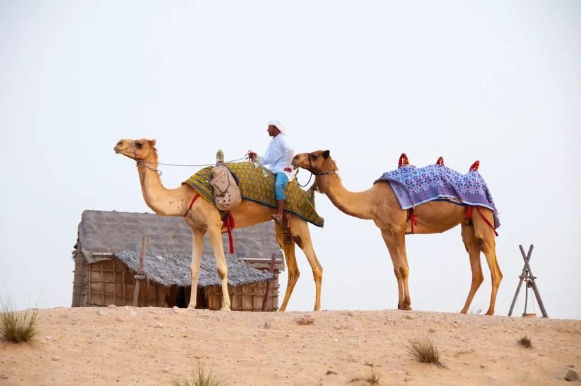 Dubai Dune Buggy, Desert Camels, dubai attractions