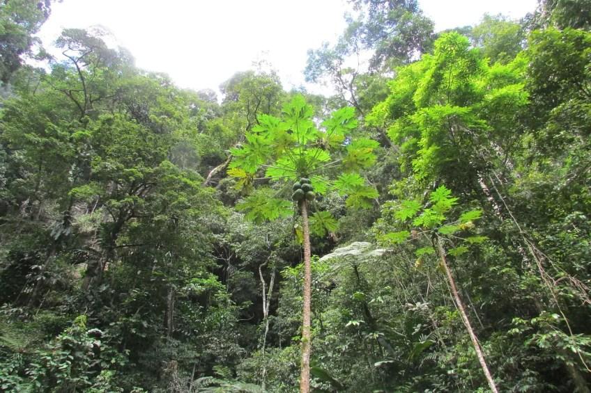 Pack for travel to Peru, Peru Rainforest