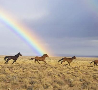 wild horses 2239420 1280