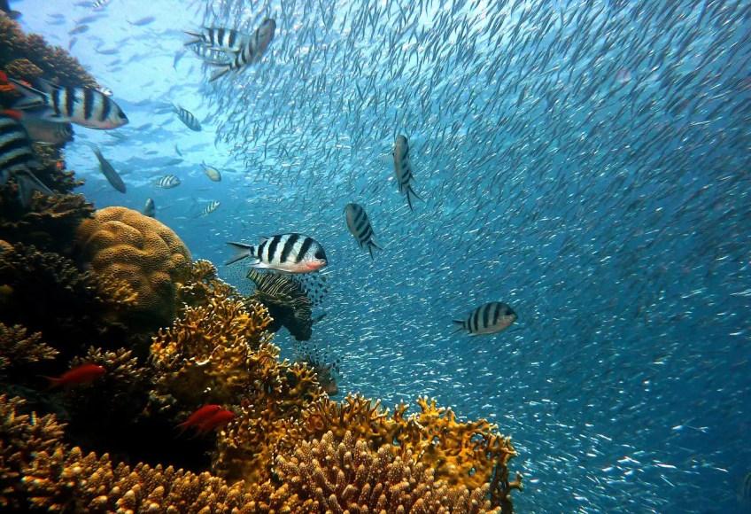 fish underwater near coral reef