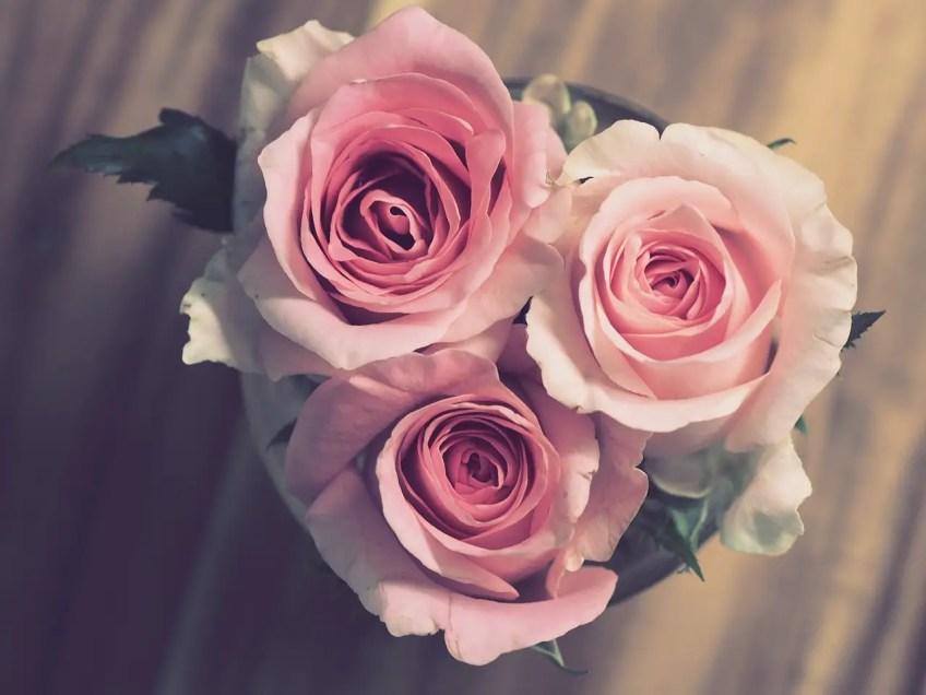 elegant guest room, roses