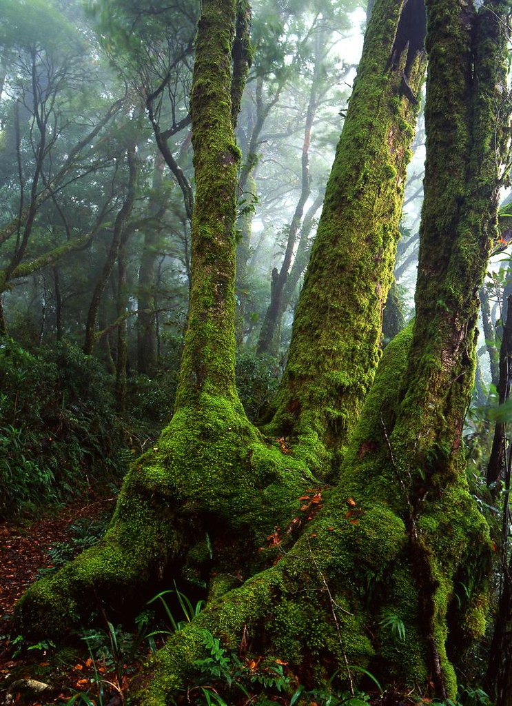Lamington National Park Magicalplaces in Queensland