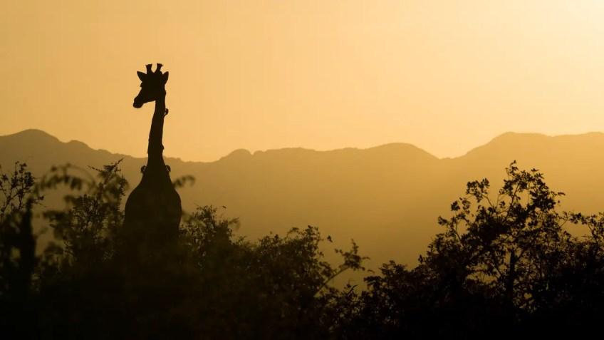 south africa, giraffe, warm destinations