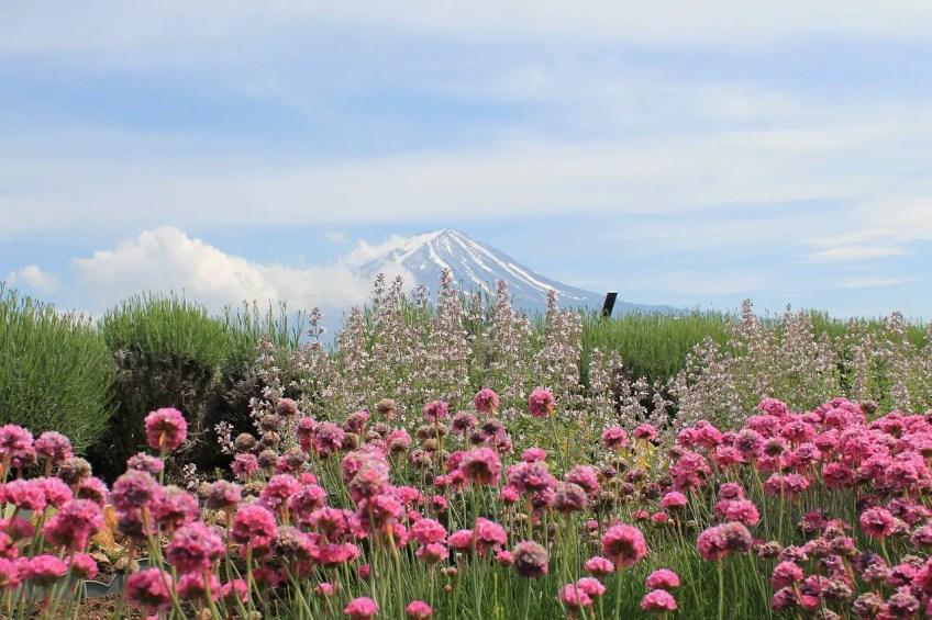Mount Fuji, beginner Mountain Climbing